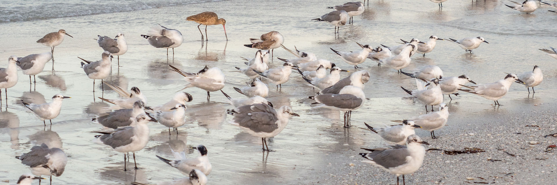 Sea birds at the waters edge.
