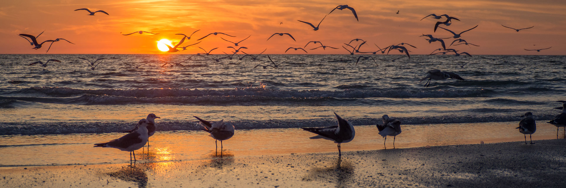 Beach birds and sunset over the water.