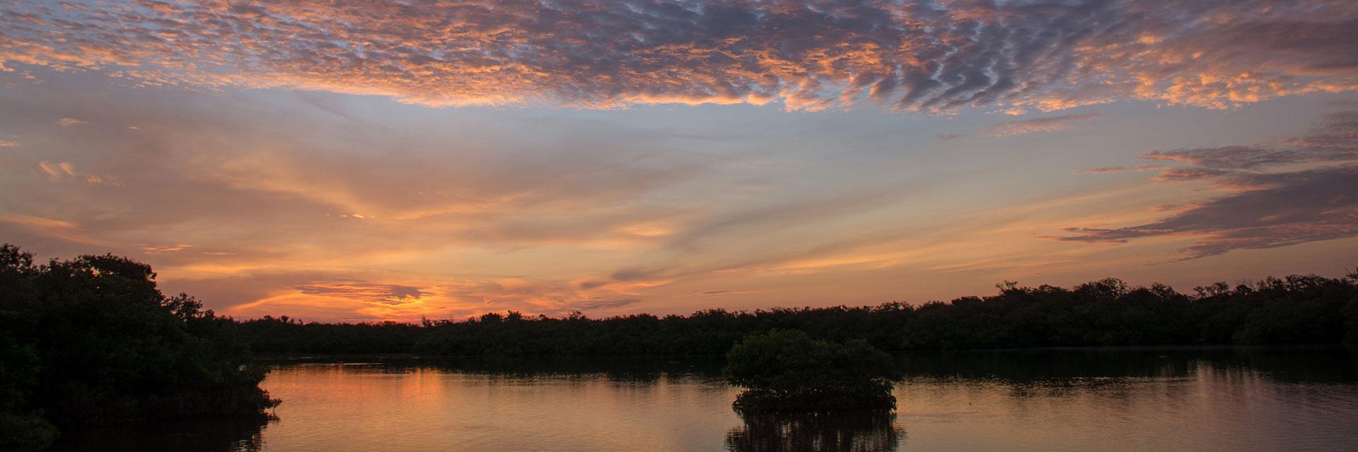 Mangroves at sunset.